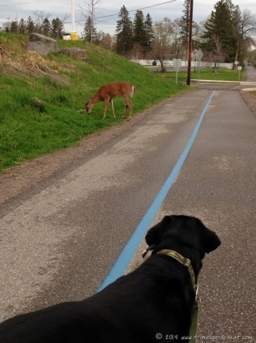 Dog and Deer on the Lakewalk