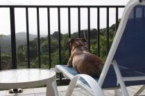 Leona ponders the view