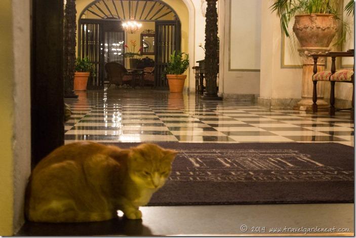 Gato in the doorway of Hotel El Convento
