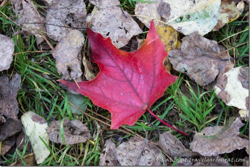Hawk Ridge October 20141008 2