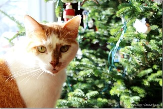 Cat by the Tree