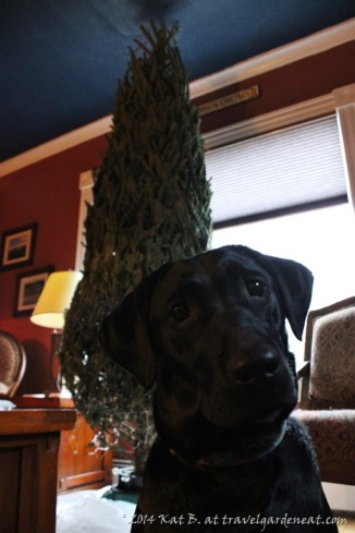Puppy and the Christmas tree