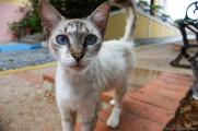 Feline warmth in Old San Juan