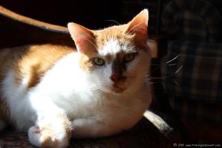 My orange feline friend