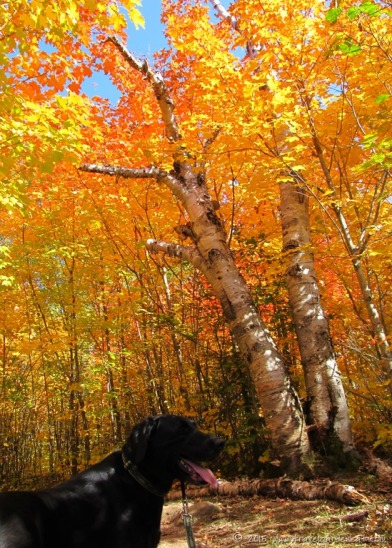 Fall hike with a friend