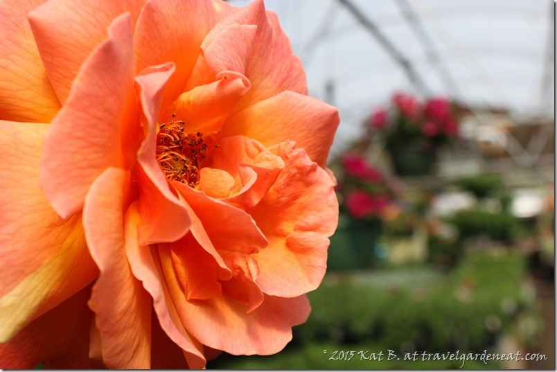 Byrns Greenhouse of Zim