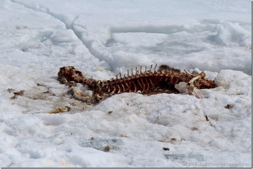 Death on Ice