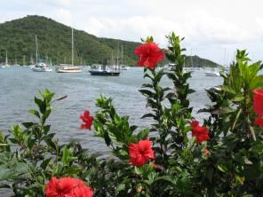 Coral Bay ~ St. John, USVI