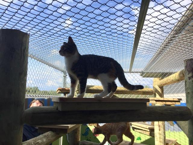 "The ""catio"" at Animal Allies Human Society in Duluth, MN"