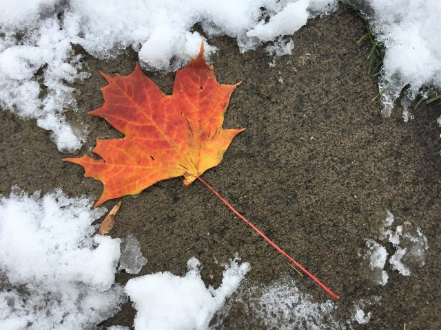 Winter versus Fall