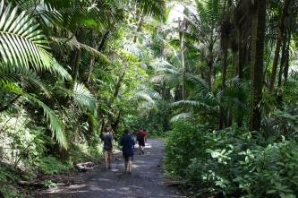 El Yunque Trail