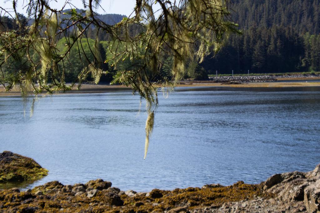 Alaska 2019-05-25 (23)