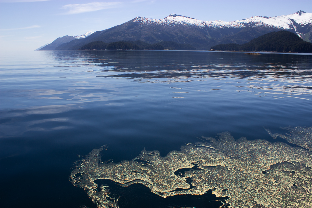 Pollen art on the surface of Alaska's Inside Passage waters