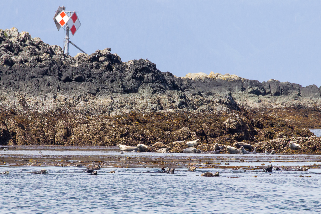 Sea otters and seals in Alaska's Inside Passage