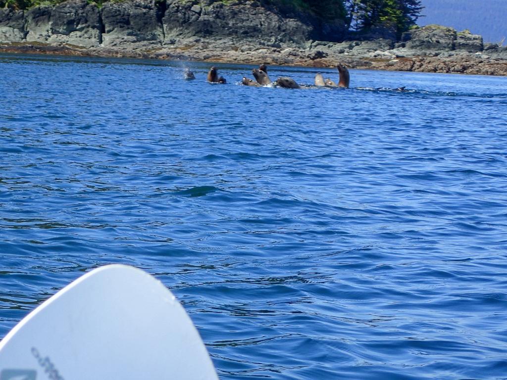 Kayaking in Frederick Sound, Alaska